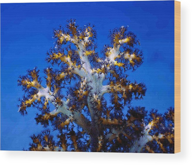 Coral Wood Print featuring the photograph Tree Coral by Dragica Micki Fortuna
