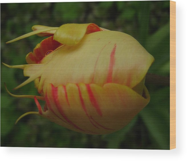 Nature Wood Print featuring the digital art Tulip Or Sea Creature by Laura Johnson