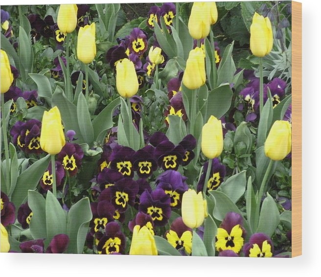Tulips Wood Print featuring the photograph Tulips And Pansies by Mindy Newman