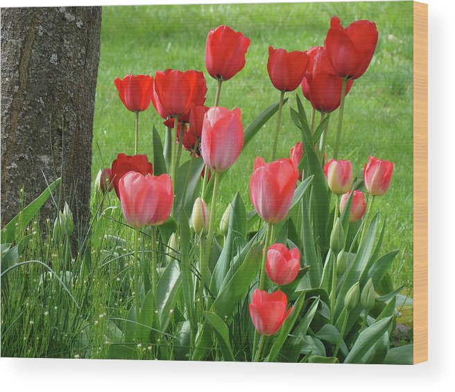 �tulips Artwork� Wood Print featuring the photograph Tulips Flowers Art Prints Spring Tulip Flower Artwork Nature Art by Baslee Troutman