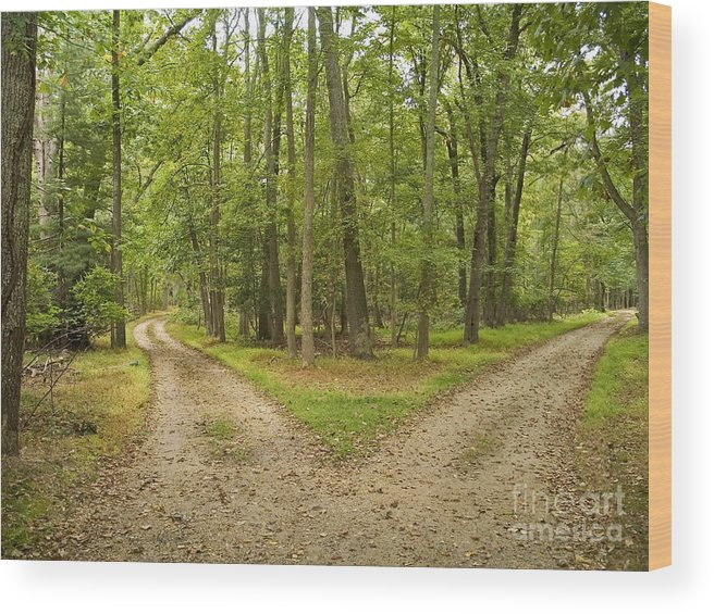 Decisions Wood Print featuring the photograph Two Paths by Andrew Kazmierski