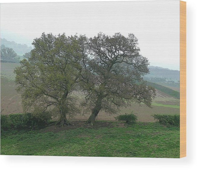 Trees Cheshire Landscape Wood Print featuring the photograph Two Trees by John Bradburn