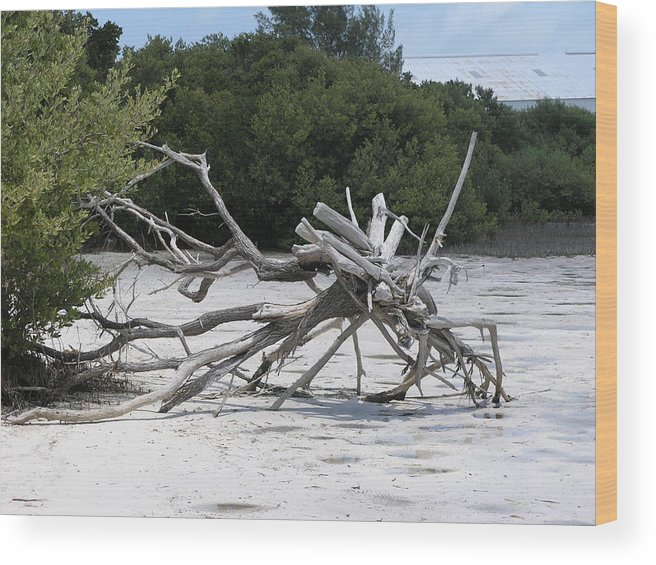 Driftwood.beach Wood Print featuring the photograph Uprooted by Jim Derks