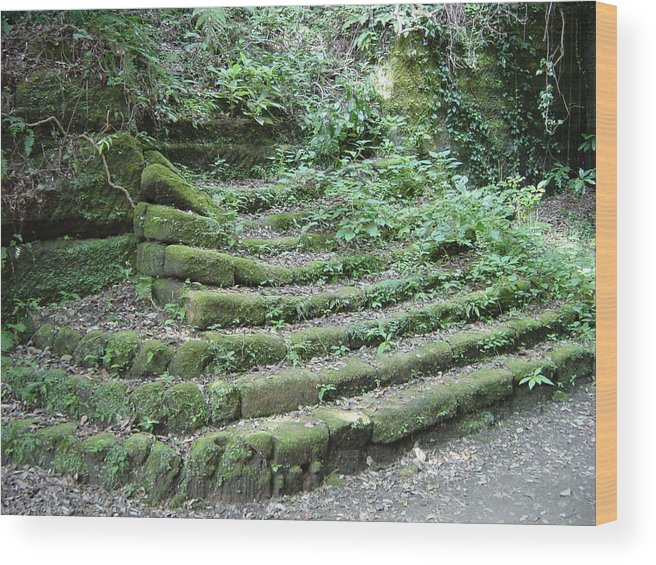 Stairs Wood Print featuring the photograph Venerable Ascent by D Turner