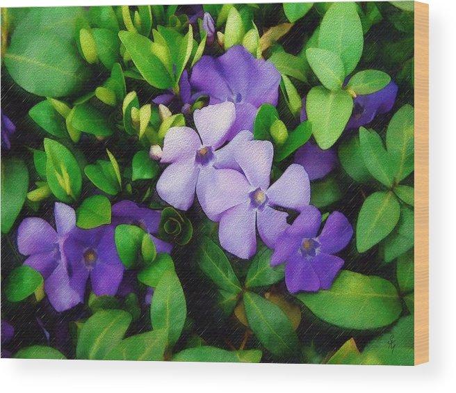 Vinca Wood Print featuring the photograph Vinca by Sandy MacGowan