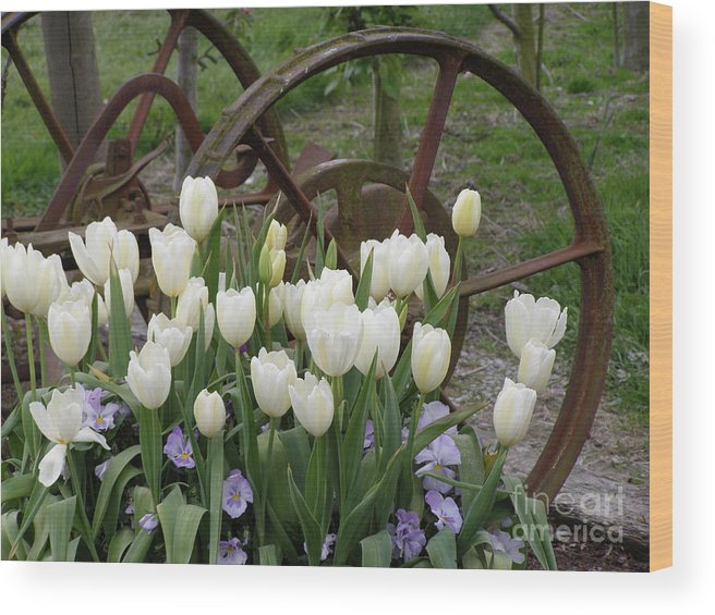 White Wood Print featuring the photograph Wagon Wheel Tulips by Louise Magno