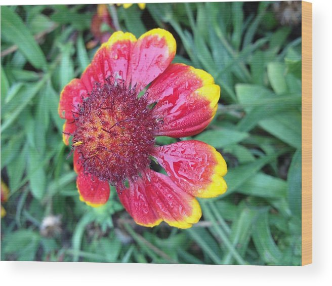 Flower Wood Print featuring the photograph Warning Dew by Tim Verplank