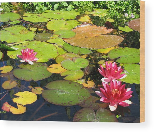 Travel Wood Print featuring the photograph Water Lilies At San Juan Capistrano by Beverlee Singer