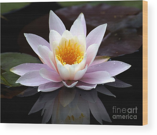 Waterlily Wood Print featuring the photograph Water Lily With Reflection by Neil Doren