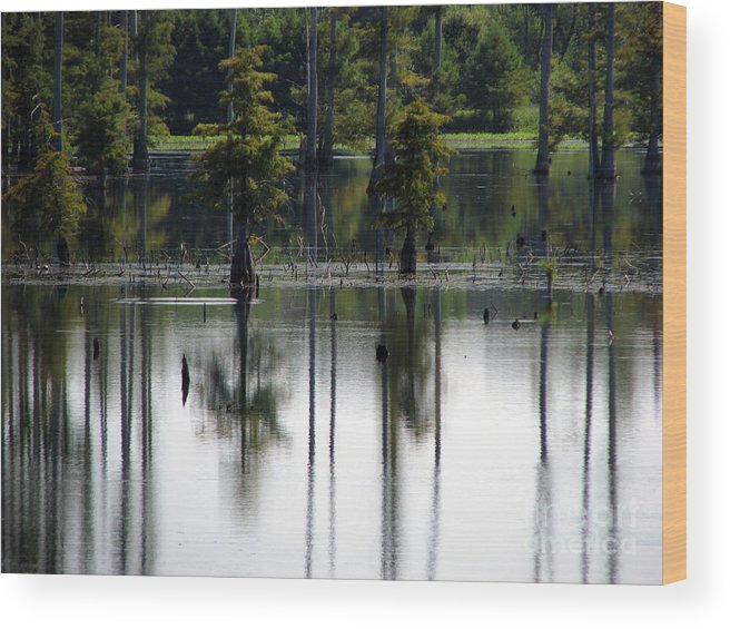 Wetlands Wood Print featuring the photograph Wetland by Amanda Barcon