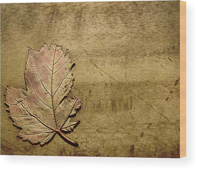 Autumn Wood Print featuring the photograph ...while You Fall Apart by Dana DiPasquale