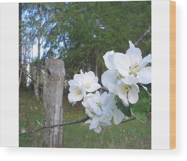 Flowers Wood Print featuring the photograph White Flowers by Valerie Josi