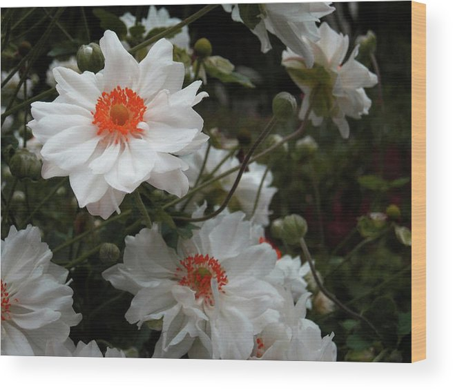 White Wood Print featuring the photograph White Satin by Stacy Scandrett
