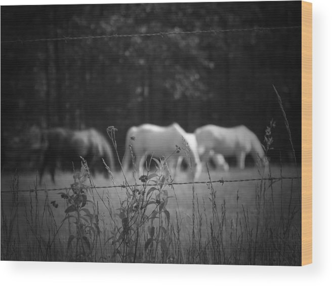 Horses Wood Print featuring the photograph Wild Restraint by Jessica Burgett