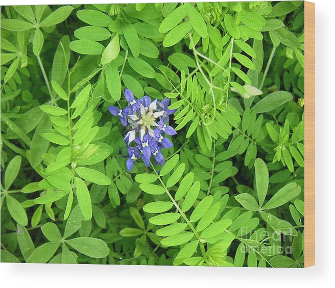 Nature Wood Print featuring the photograph Wildflowers - Protective Detail by Lucyna A M Green