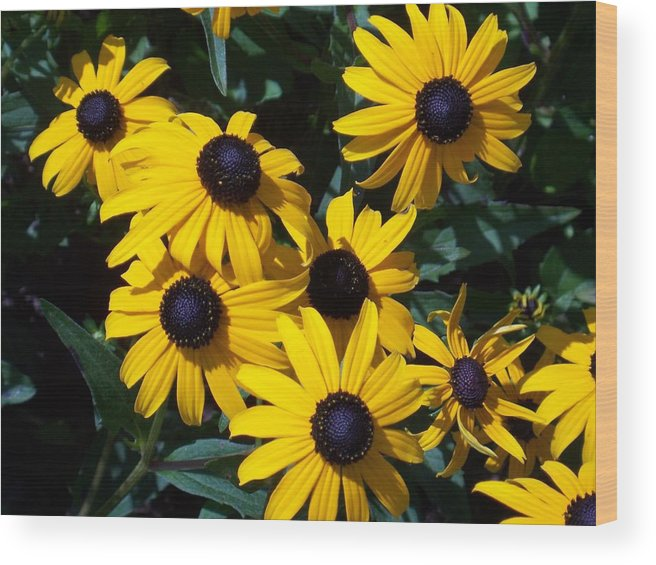 Yellow Flowers Wood Print featuring the photograph Yellow Daisies by Ellen B Pate
