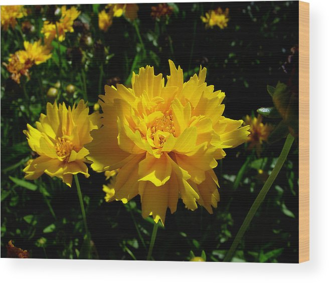 Flower Wood Print featuring the photograph Yellow Symphony by Edan Chapman