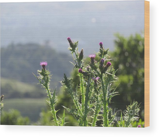 Thistles Wood Print featuring the tapestry - textile Young Thistles by Suzanne Leonard