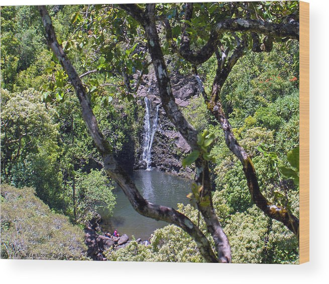 Water Fall Wood Print featuring the photograph Secluded Falls by Nicole I Hamilton