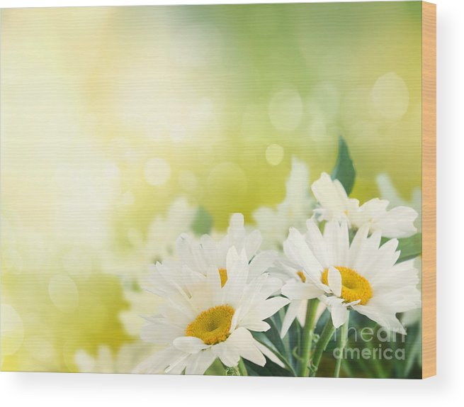 Wood Print featuring the photograph Spring Background by Mythja Photography