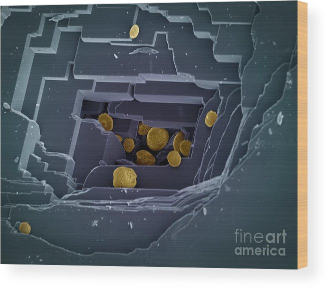 Acidity Wood Print featuring the photograph Calcium Carbonate, Sem by Science Photo Library
