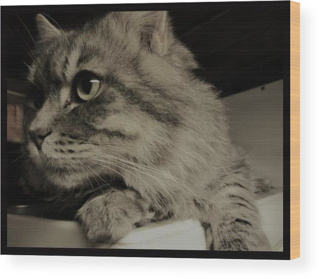 Cat Wood Print featuring the photograph Chevy by Kjell Steinar Stroem