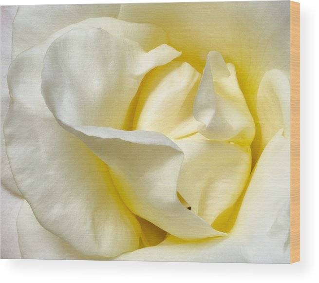 Rose Wood Print featuring the photograph Creamy Rose by Georgette Grossman