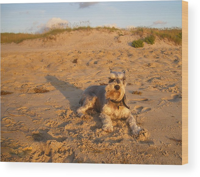 Schnauzer Wood Print featuring the photograph Schnauzer At Dawn by Stacy Abbott