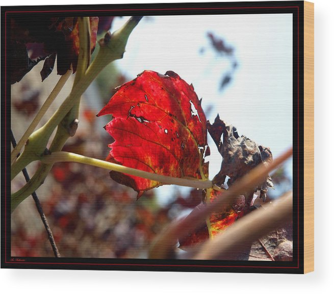 Vine Wood Print featuring the photograph Vine Leaf At Fall. 02 by Arik Baltinester