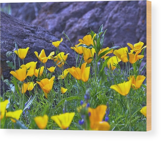 Wild Flowers Wood Print featuring the photograph Wild Flowers by Stephen Dilley