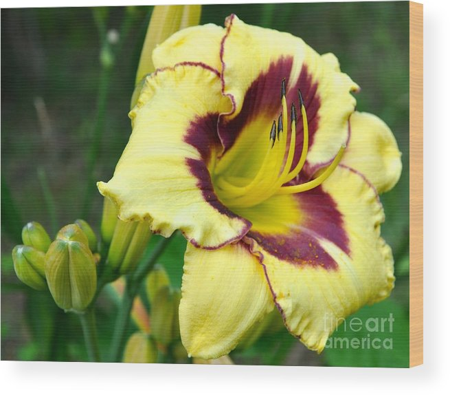 Lily Wood Print featuring the photograph Yawning Lily by Christina McKinney