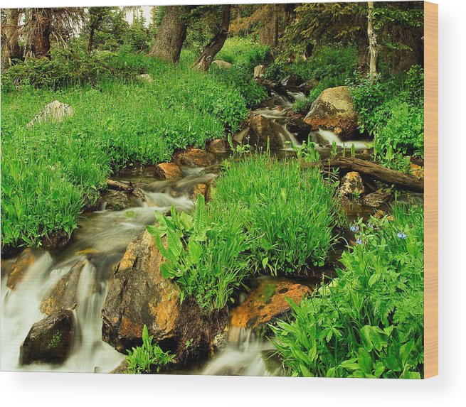 Wyoming Wood Print featuring the photograph Mountain Stream by N D Finer