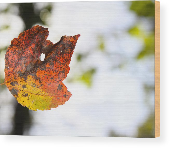 Delmarva Destinations Wood Print featuring the photograph Artsy-fartsy Autumn I by Theresa Johnson