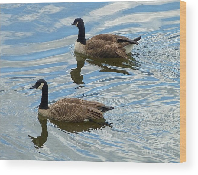 Canada Geese Wood Print featuring the photograph Going West by Louise Peardon