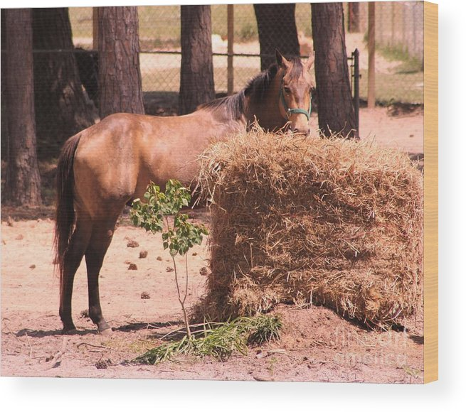 Horse Wood Print featuring the photograph Hay's For Horses by Michelle Powell