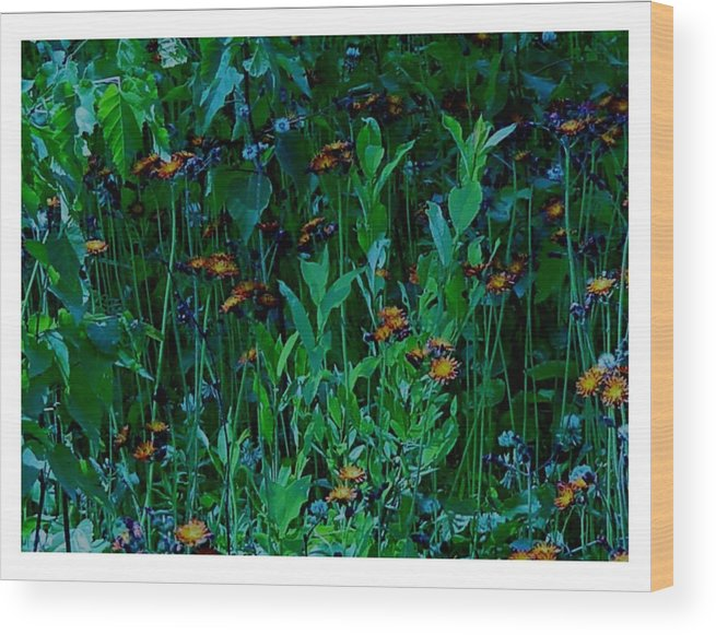 Orange Wood Print featuring the photograph Orange Among The Blue by Frank Wickham