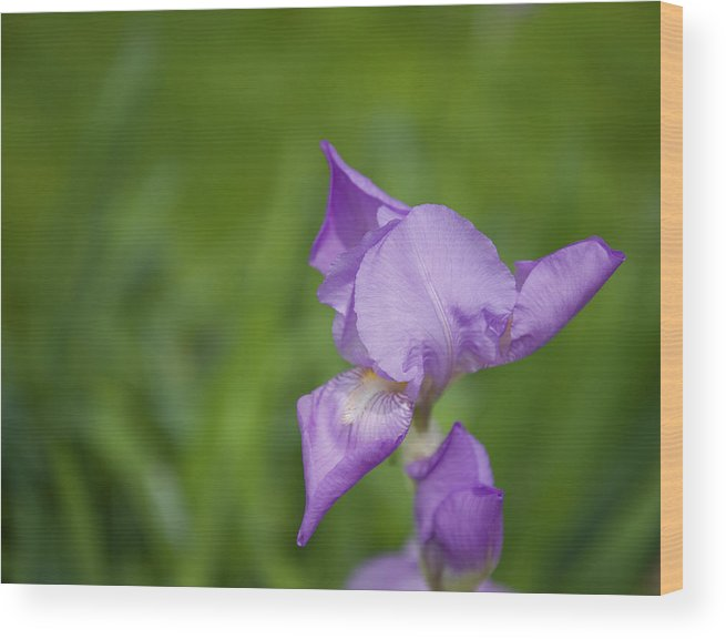 April Wood Print featuring the photograph Spring Is Blooming by Malania Hammer