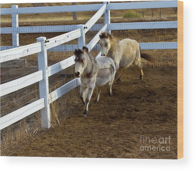 Agriculture Wood Print featuring the photograph Miniature Horse by Crystal Garner