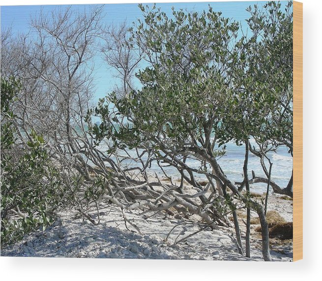Landscape Wood Print featuring the photograph Beach Brush by Peter McIntosh