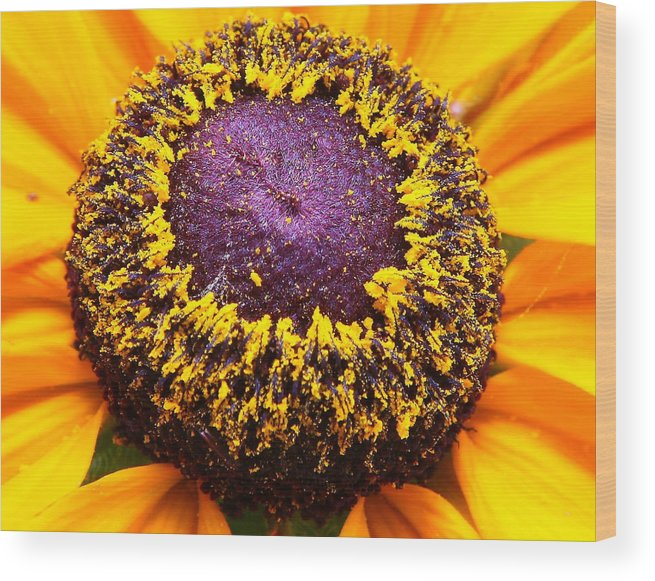 Nature Wood Print featuring the photograph Black-eyed Center by Larry Federman