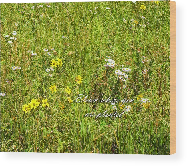 Bloom Wood Print featuring the photograph Bloom by Lou Novick