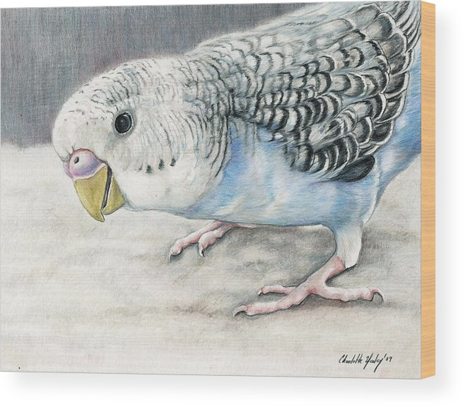Bird Wood Print featuring the painting Blue Budgie by Charlotte Yealey