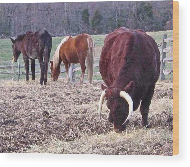 Bull Wood Print featuring the photograph Bull And Horses, Mt. Vernon by David Rubinstein