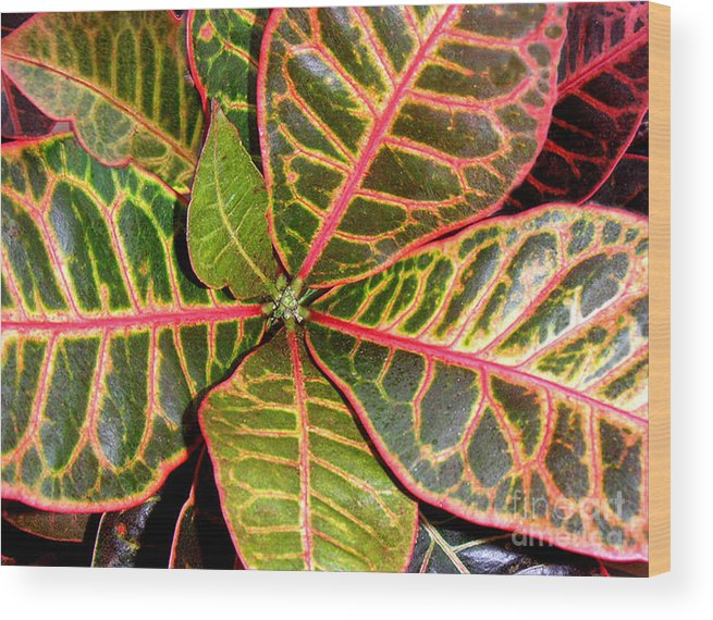 Nature Wood Print featuring the photograph Croton - A Center View by Lucyna A M Green