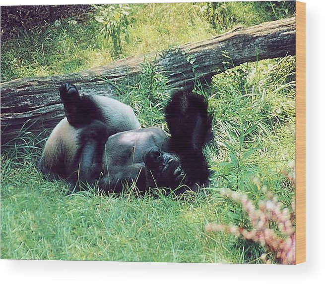 Animals Wood Print featuring the photograph Daydream Believer by Jan Amiss Photography