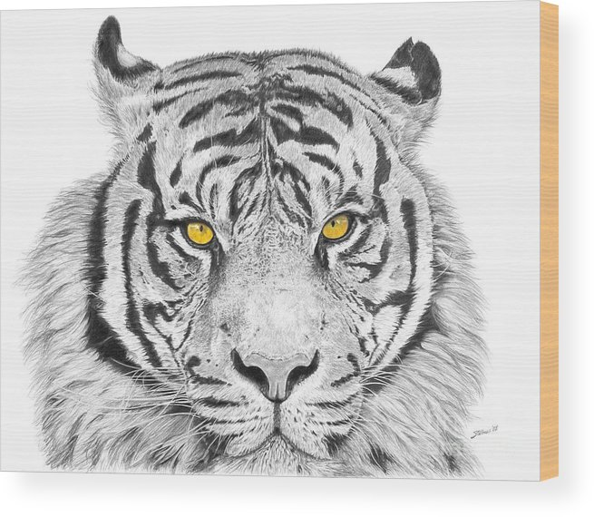 Tiger Wood Print featuring the drawing Eyes Of The Tiger by Shawn Stallings