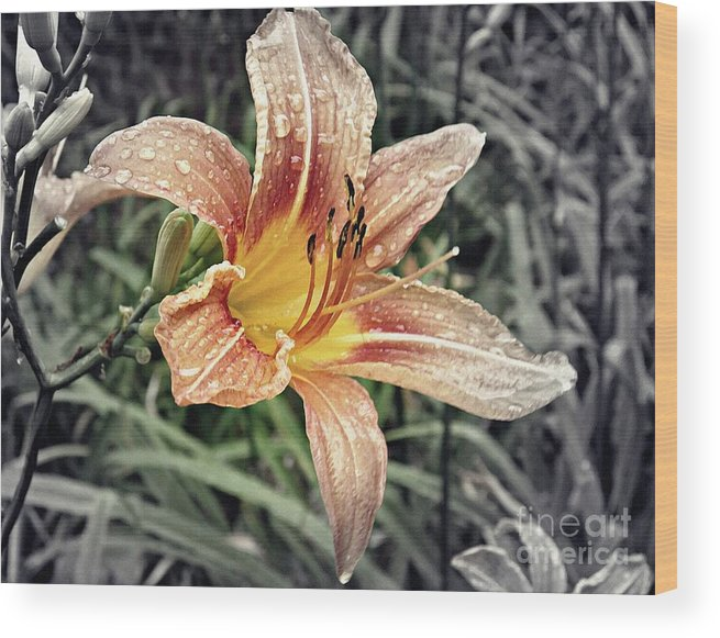 Lily Wood Print featuring the photograph Fading Memory by Sarah Loft