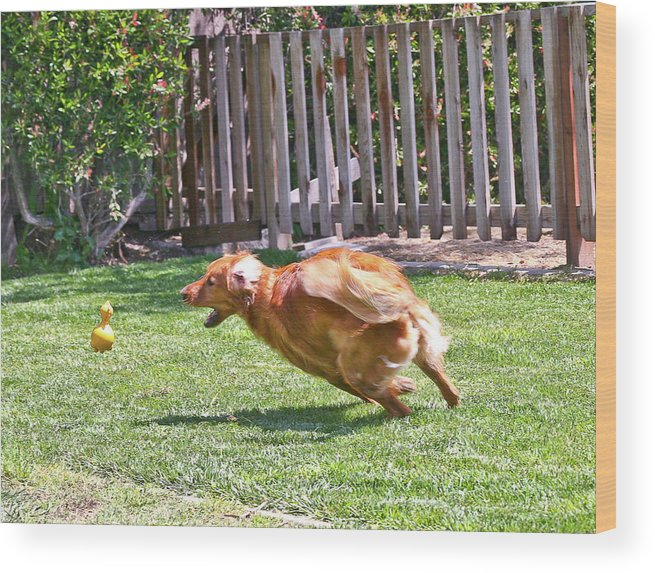 Dog Wood Print featuring the photograph Fetch Excellance by Liz Santie