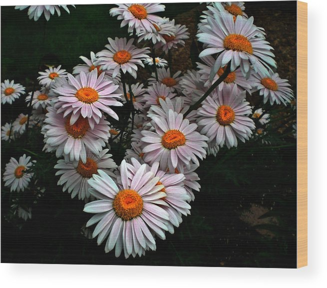 Birthday Wood Print featuring the photograph Floating Daisies by Sholeh Mesbah