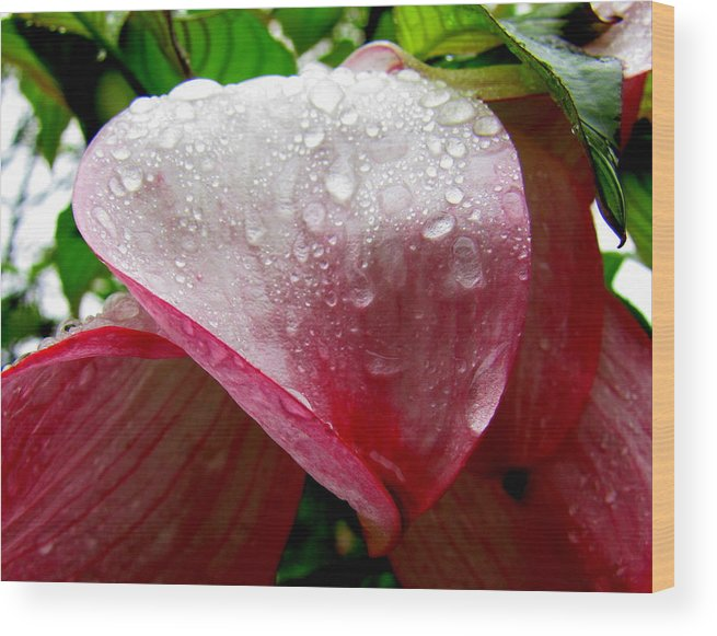 Raindrops Wood Print featuring the photograph Flowering Dogwood by Lisa Jayne Konopka